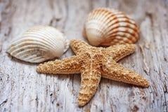 Seashells on the old weathered wood Stock Image