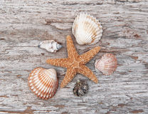 Seashells on the old weathered wood Royalty Free Stock Photos