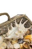 Seashells in old wicker baket isolated. Vertically. Stock Photos