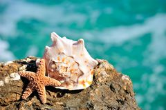 Free Seashells On Rock Stock Photography - 9614242