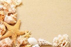 Free Seashells On Seashore In Tropical Beach Royalty Free Stock Image - 56661696