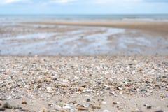 Free Seashells On The Beach Stock Photo - 158996280