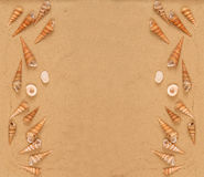 Seashells On The Sand Stock Image