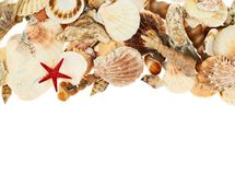 Seashells over the white background Royalty Free Stock Photography