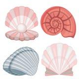 seashells pérola Imagens de Stock
