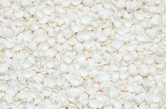 Seashells pattern texture background Stock Photos