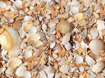 Seashells pattern Stock Photography