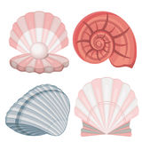 Seashells.pearl. Seashells. pearl. isolated image. shades of pink Stock Images