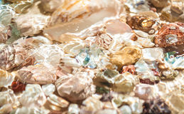 Seashells and pearl lying on sea shore underwater Royalty Free Stock Photo