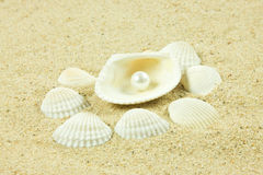 Seashells,pearl, starfish on sand details of under water world Royalty Free Stock Photography