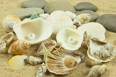 Seashells,pearl, starfish on sand holiday sea Royalty Free Stock Photography