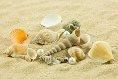 Seashells pearl starfish on sand holiday sea Stock Image