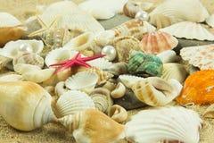 Seashells,pearl, starfish on sand holiday sea Royalty Free Stock Photo