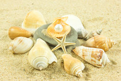 Seashells,pearl, starfish on sand holiday sea Stock Photos