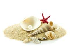 Seashells,pearl, starfish on sand holiday sea Stock Image