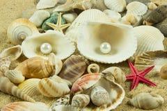 Seashells,pearl starfish on sand holiday sea Stock Photo