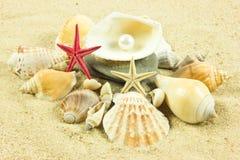 Seashells,pearl, starfish on sand holidays Royalty Free Stock Image