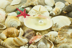 Seashells,pearl  starfish on sand star waterlife Stock Photos
