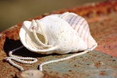 Seashells and Pearls 2 Stock Image