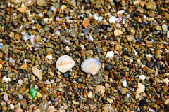 Seashells on pebble Royalty Free Stock Images
