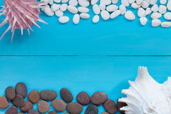 Seashells and pebble on wood background. Top view with copy spac Stock Photos