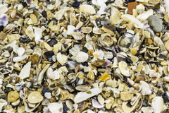 Seashells and pebbles, background Stock Photography