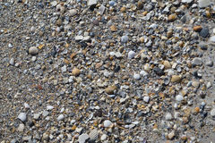 Seashells and pebbles on the beach Stock Images