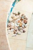 Seashells and pebbles lying on bottom of swimming pool Stock Photos