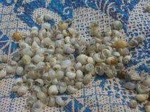 Seashells pequenos fotografia de stock