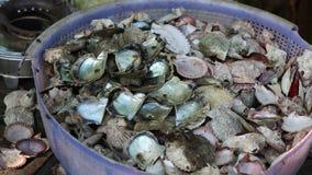 Seashells, Phu Quoc island, Kien Giang province, Vietnam. Flies alighting on seashells, Phu Quoc island, Kien Giang province, Vietnam. Phu Quoc is blessed with stock video