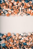 Seashells with place for text Stock Photos