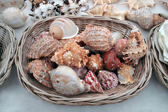 Seashells pour la vente. Photo stock