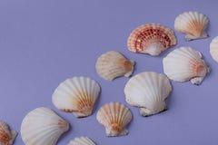 Seashells on purple Stock Photos