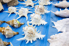Seashells put up for sale Royalty Free Stock Photos