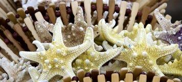 Seashells que estão sendo vendidos pelo lado de mar Fotografia de Stock Royalty Free