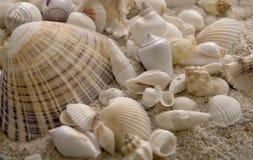 Seashells que se sientan en arena Imagenes de archivo