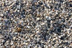 Seashells quebrados Imagen de archivo libre de regalías