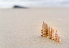 Seashells queuing on the beach. In beautiful sunny morning Stock Photos