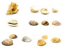 seashells réglés Images libres de droits