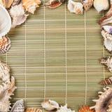 Seashells rama seashells Zdjęcie Stock