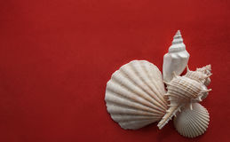 Seashells on red. Seashells composition laying on red crimson background Royalty Free Stock Photography