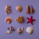 Seashells, red sea star and coral Stock Photos