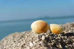 Seashells on rock Royalty Free Stock Photos