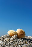 Seashells on rock Stock Photography