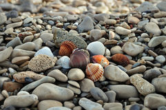Seashells on rocky beach Stock Images