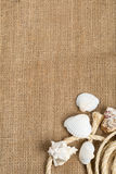 Seashells with rope on brown burlap cloth Royalty Free Stock Image
