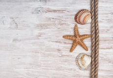 Seashells and rope on the old  wood. Marine background Stock Photography