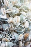 Seashells on rope thread for background. Colorful sea shells of various sizes of curtain for background, select focus with shallow depth of field Stock Photography