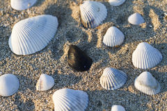 Seashells in sabbia Fotografie Stock