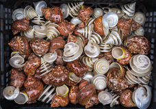Seashells for sale. Seashells for sale at market Stock Photography